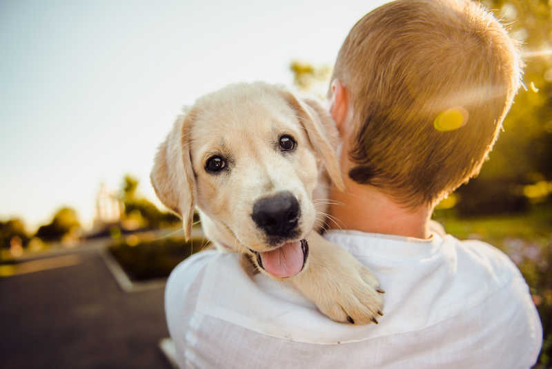 Renting with pets. The new rental laws in Victoria